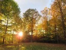 日没間近の我が家の庭